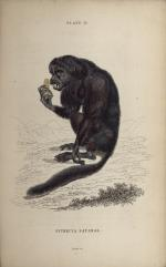 Natural History Illustrations - Flickr Collection
