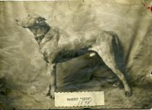 Dick the dog, college mascot, 1898