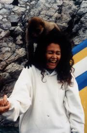 Wildlife, c.1993